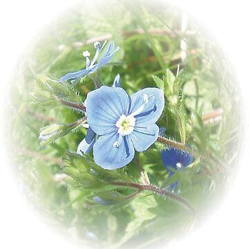 Bird's-eye Speedwell flower by dizzyg