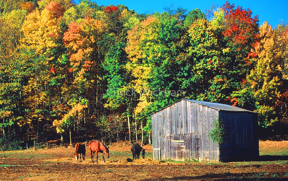 HORSES, AUTUMN by Chuck Wickham