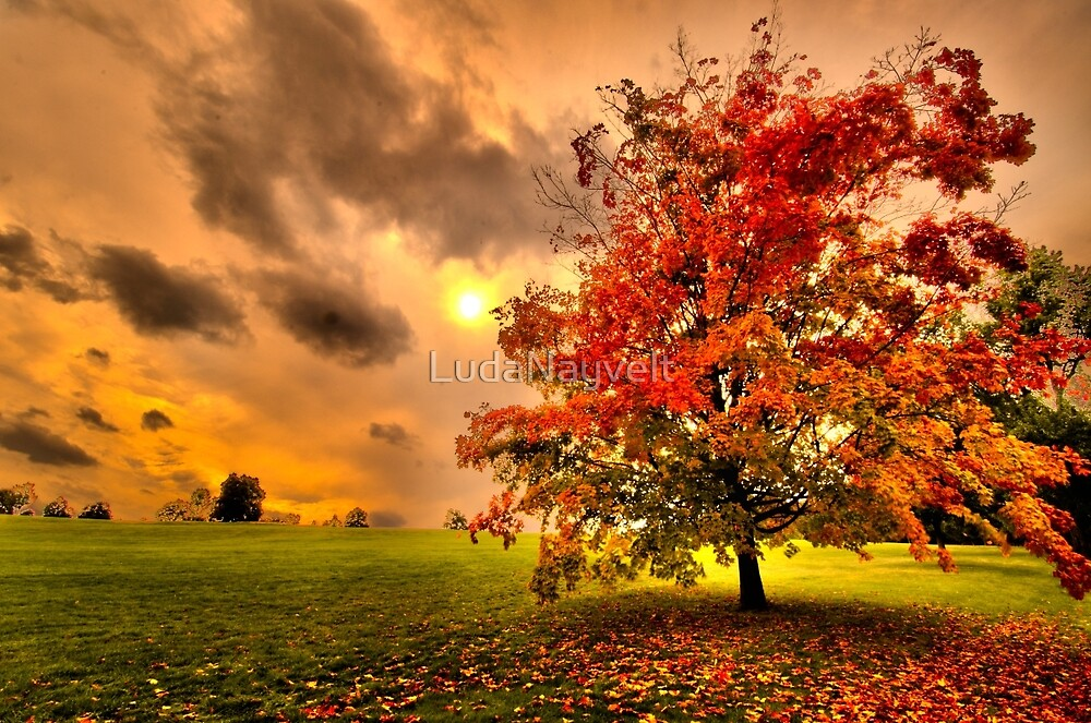 Red Maple tree  by LudaNayvelt