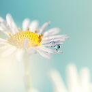 Daisy with waterdrops by Ellen van Deelen