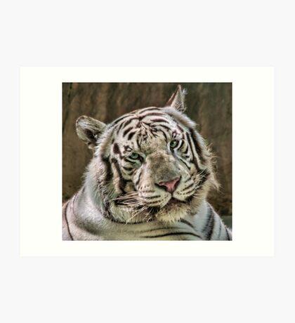 (Not So) White Tiger Art Print