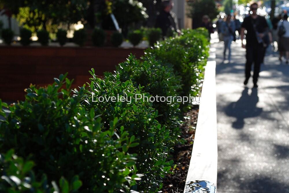 Urban Greenery by Loveley Photography