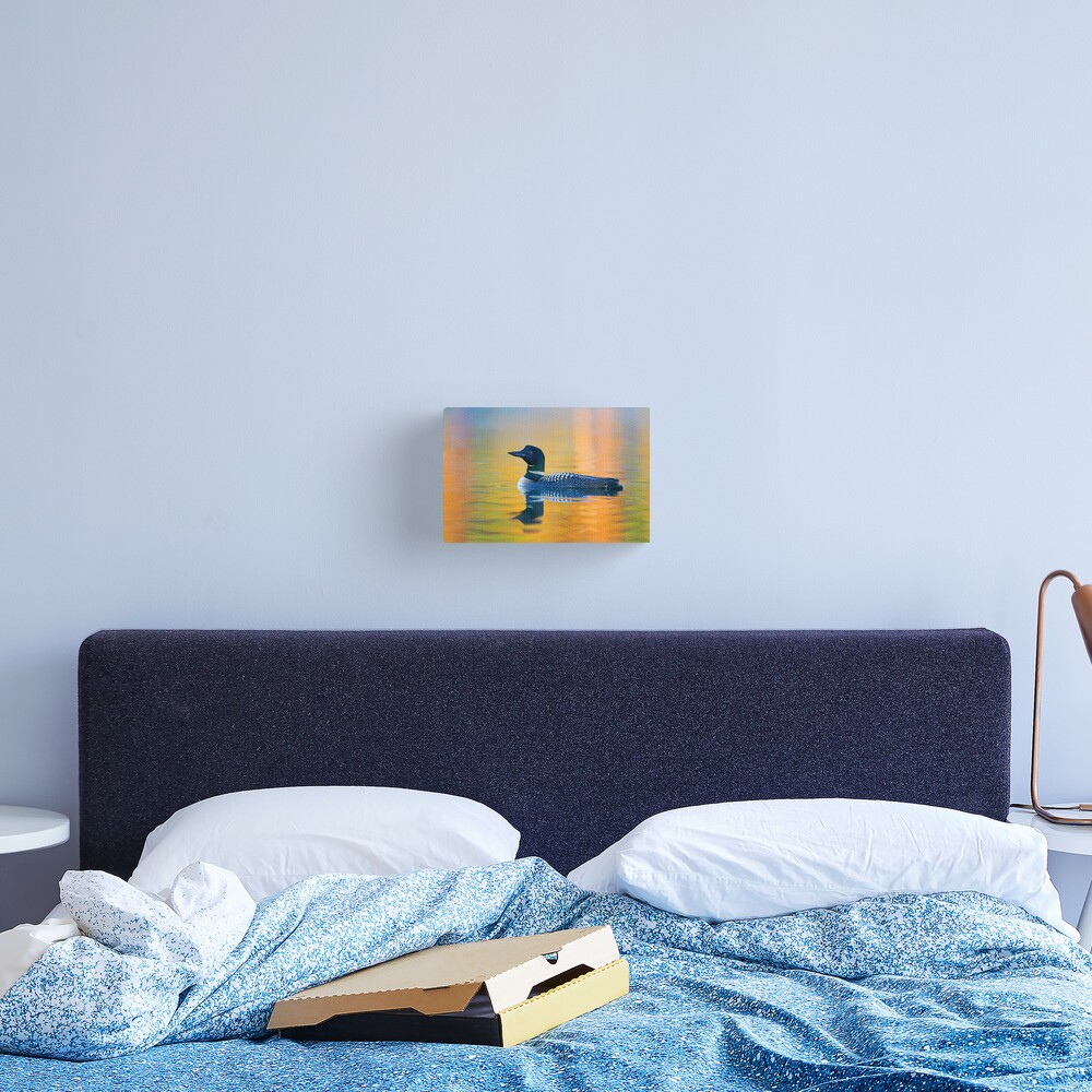 Rainbow Loon - Common Loon Canvas Print