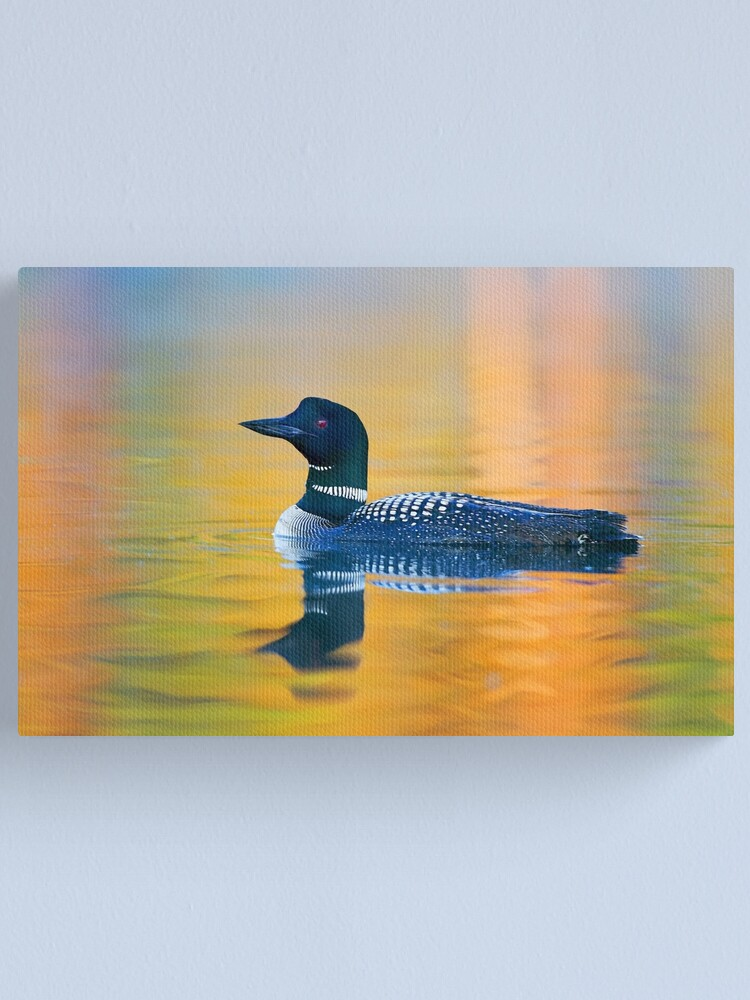Alternate view of Rainbow Loon - Common Loon Canvas Print