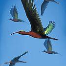 Ägyptische Ibis von Tamara Tegethoff