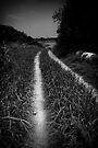 Into darkness by Vikram Franklin