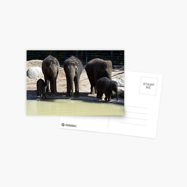 The Melbourne Zoo ~ Mali and Ongard Postcard