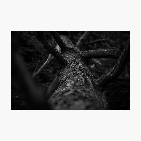 Foreign Woods (Black and White) Photographic Print
