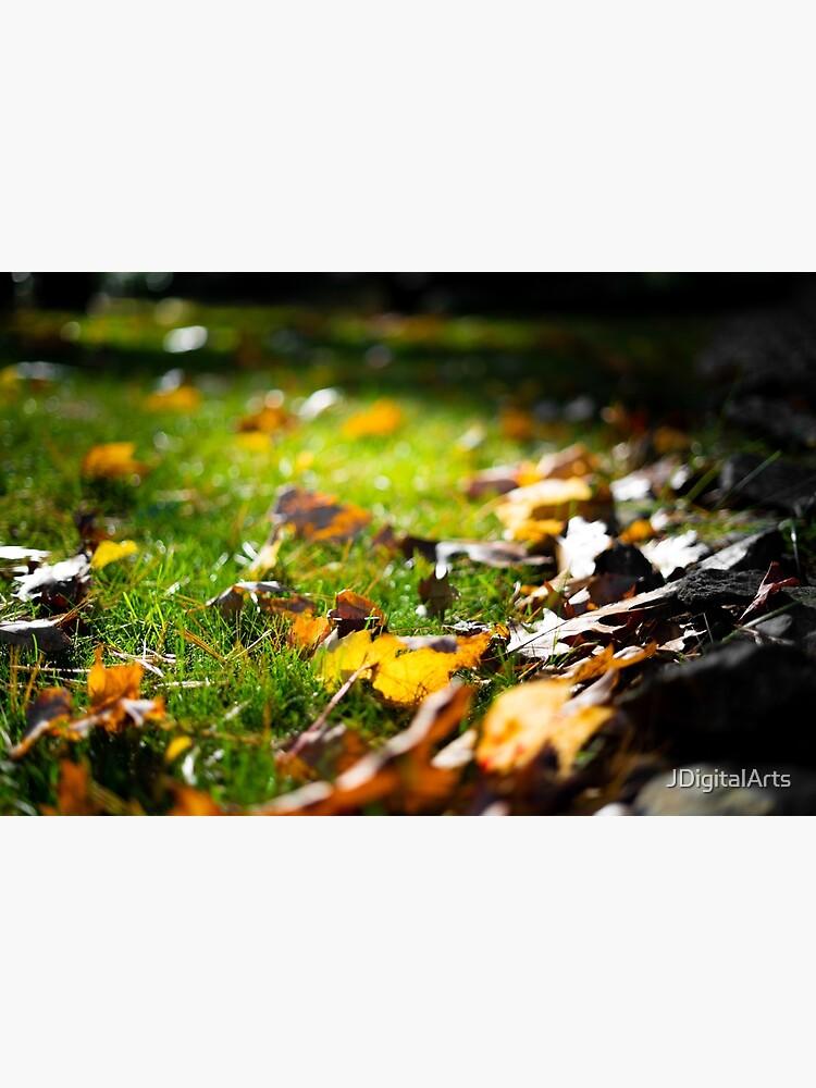 Glistening Light on Fall Leaves by JDigitalArts