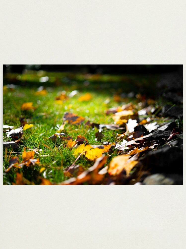 Alternate view of Glistening Light on Fall Leaves Photographic Print