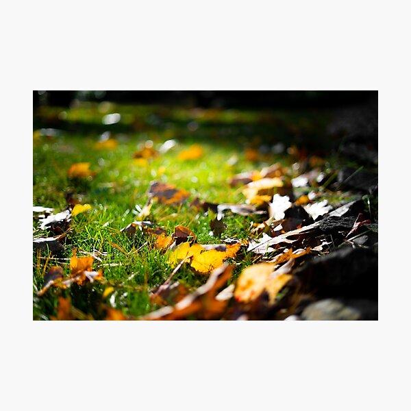 Glistening Light on Fall Leaves Photographic Print