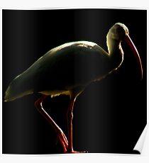 Avian Profile ~ Part 5 Poster