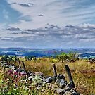 Crimple Valley ~ The Dales ~ by Sandra Cockayne