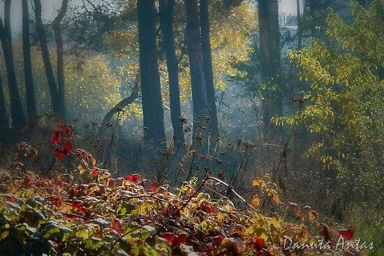 Morning Light by Danuta Antas