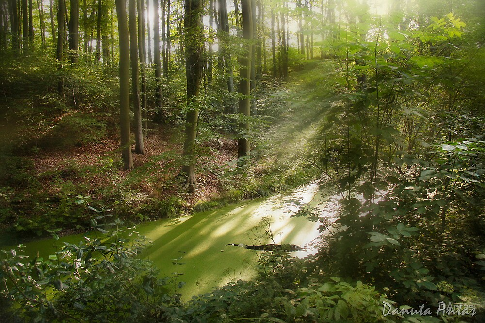 The Land Of Fairy Tales by Danuta Antas