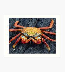 Galapagos Crab Art Print