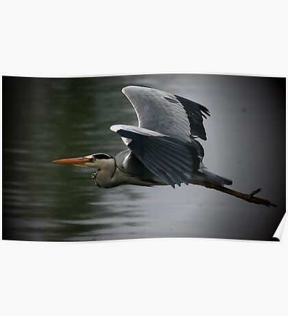 Came Heron Past Poster