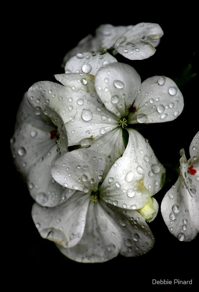 Raindrops on Petals by Debbie Pinard