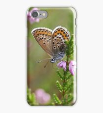Silver-studded blue on Heather iPhone Case/Skin