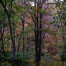 Fall Comes To Huntington, West Virginia by Fred Moskey