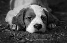 Puppy Love by Helen Green