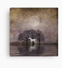 A White Horse in the Pond Canvas Print