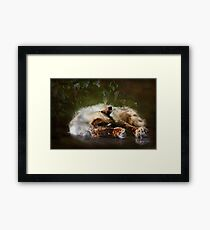"""Paws Warmed by the Sun ...""(textured) Framed Print"