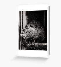 Nutria:  Pondering  Greeting Card
