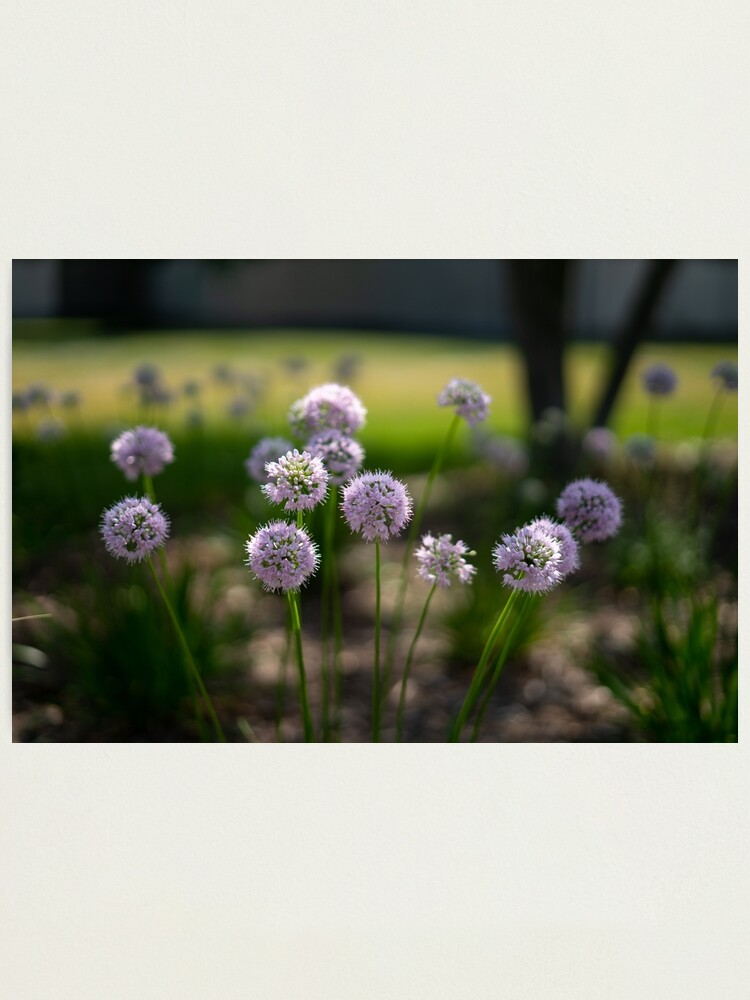 Alternate view of Summer's Lovely Flowers #1 Photographic Print