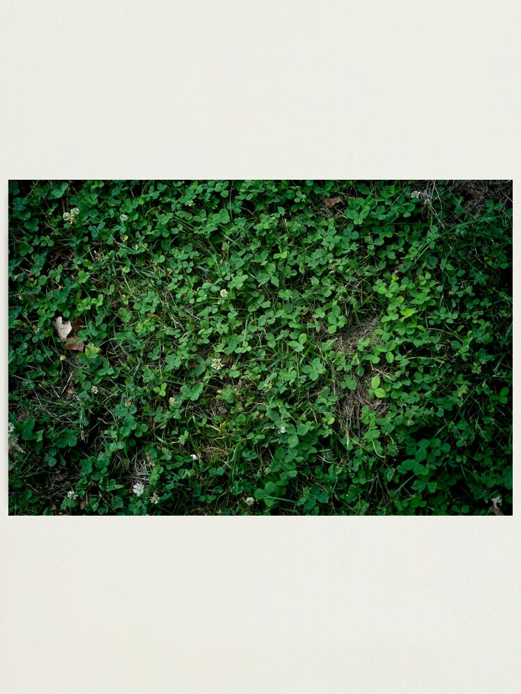 Alternate view of Leafy Wall Photographic Print