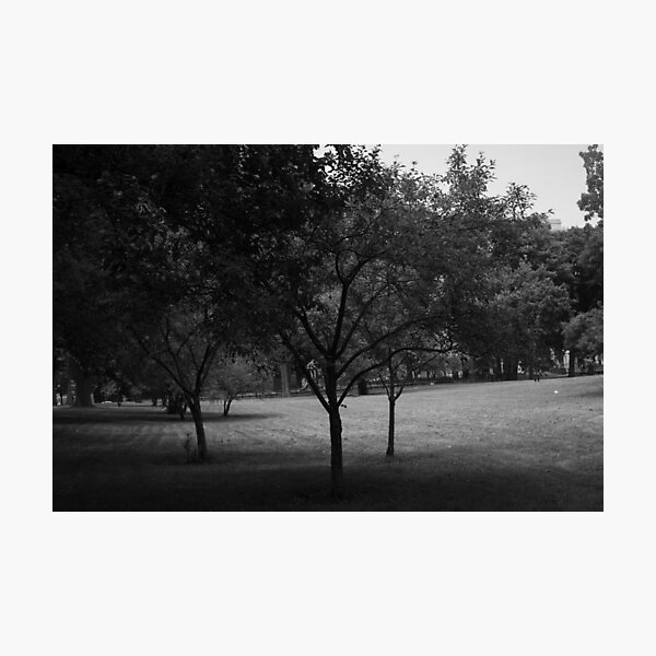 Hyde Park - Chicago Photographic Print