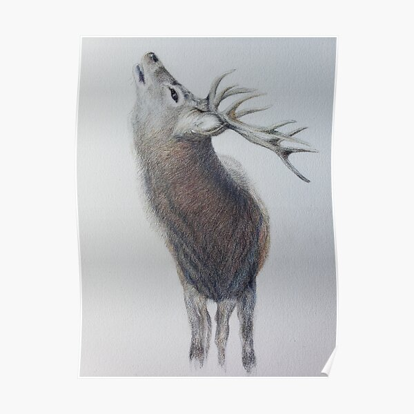 Majestic Highland Stag Poster