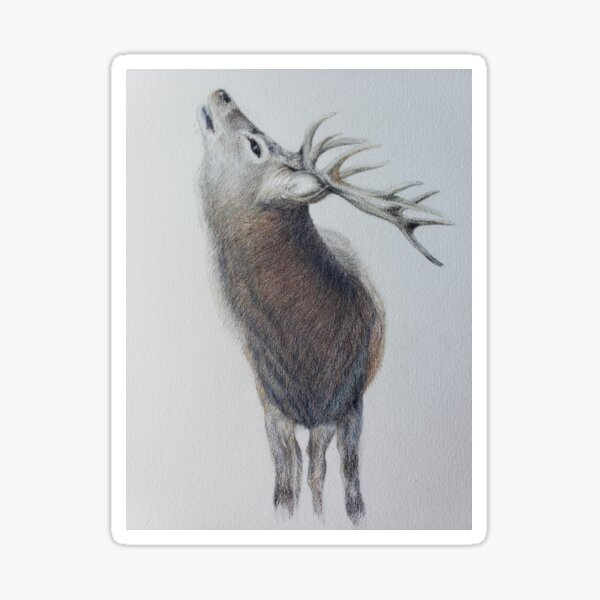 Majestic Highland Stag Sticker