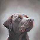 Senta the Chocolate Labrador. by cathyscreations