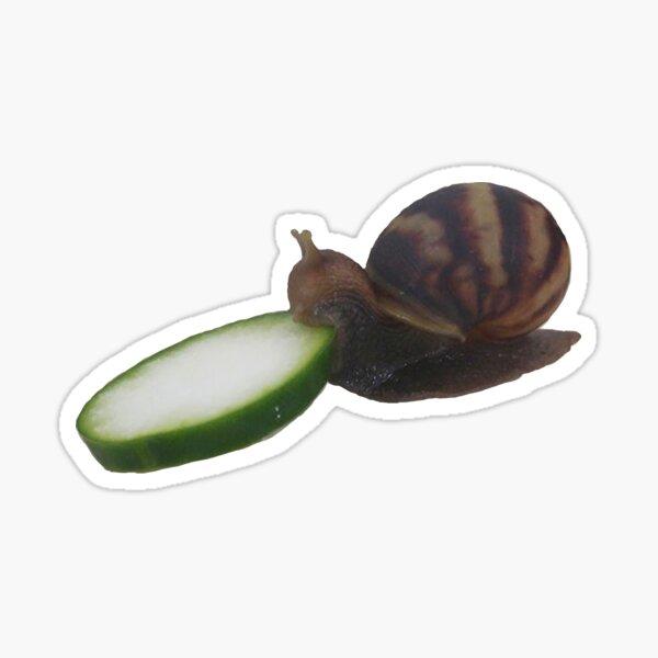 Snail Eating Cucumber Sticker