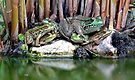 Frog Pile - My Backyard Pond by Debbie Pinard