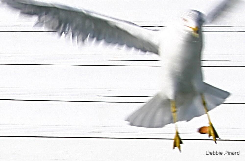 Scary Seagull - Sugarloaf Key, Florida by Debbie Pinard