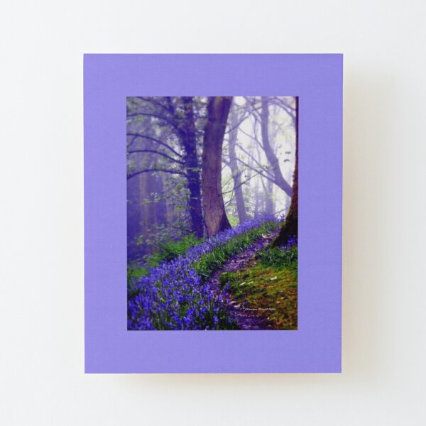 Bluebells in the Forest Rain Wood Mounted Print