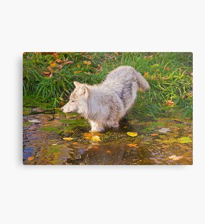Water Wolf Metal Print