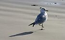 Seagull on the Beach - Port Aransas Texas by Debbie Pinard