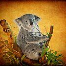 Koala Cutiness by Ann J. Sagel