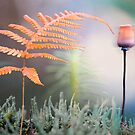 Light by natans