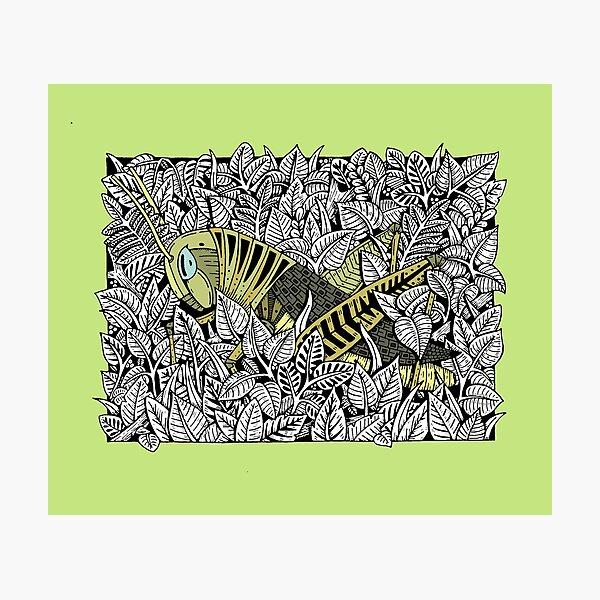 The Grasshopper Photographic Print