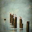 Morning Gulls by Jonicool
