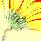 Gerbera HI Contrast by EventHorizon