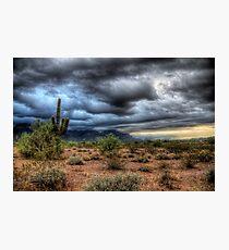 Sonoran Desert  Photographic Print