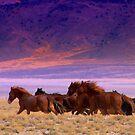 Run Wild Run Free  by Jeanne  Nations