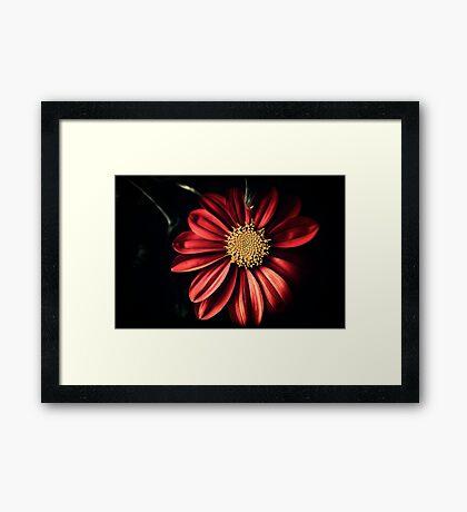 Wayside Flower Framed Print