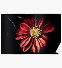 Wayside Flower Poster