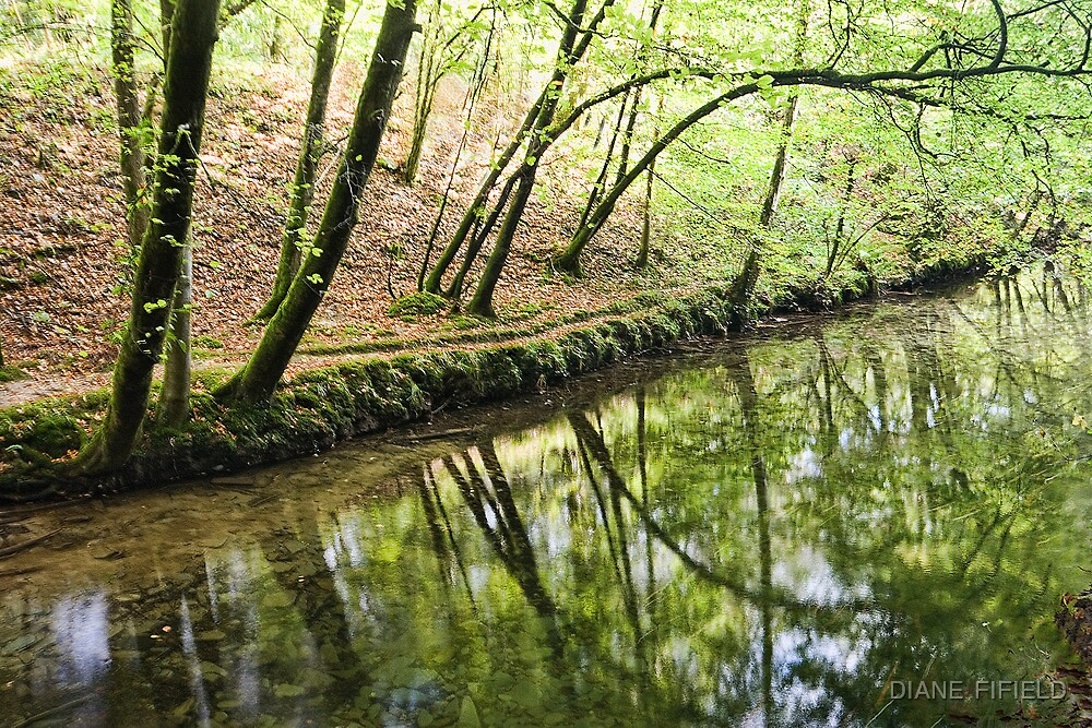 Reflections Plymbridge  by DIANE  FIFIELD